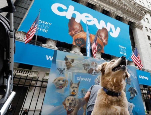 best chewy dog food