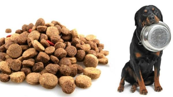 Choose the right allergy friendly canine