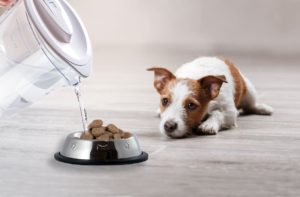 Here are some good food for puppies