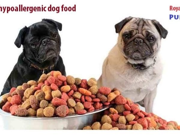 Best hypoallergenic dog food brands