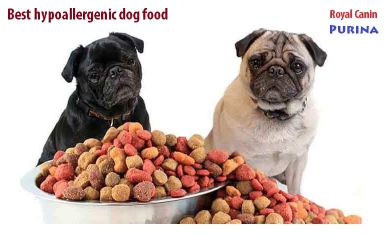 Best hypoallergenic dog food brands