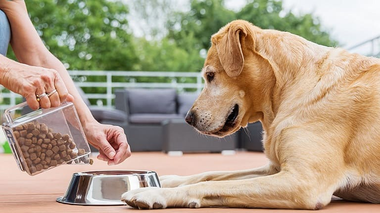 Top senior dog food for small and big breeds