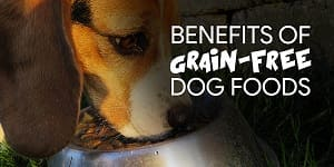 benefits of grain-free foods for adult dogs of all breeds