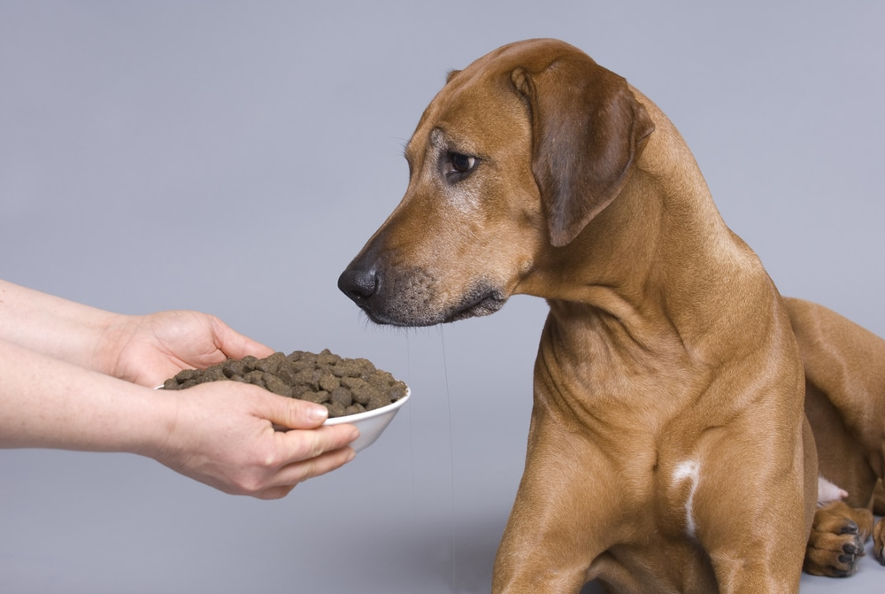 holistic dog food brands and ingredients