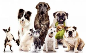 choosing holistic food for large, medium and small dogs